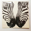 'Zebras' Square greetings card