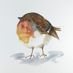 ROBIN Limited Edition A4 Print of Watercolour Painting by Diane Antone