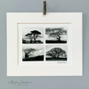 Unframed Monochrome Art Photograph - Wind Sculpted Trees