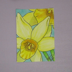 ACEO: Daffodils original painting