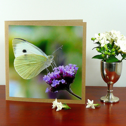 Greetings card - 'Cabbage White butterfly'
