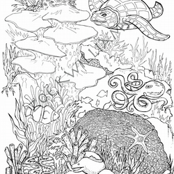 Coral Reef Colouring Page Folksy