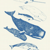 Whales and Narwhals - Live and Let Live Tea Towel