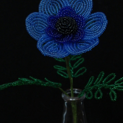 Blue French Beaded Anemone!