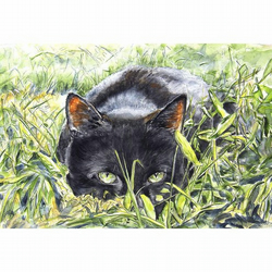 Black Cat Watercolour Signed  A4 Print (11.75 x 8.25 inches) Watching