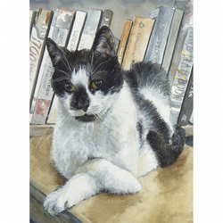 Black & White Cat Watercolour Signed Ltd Edition A4 Print (11.75 x 8.25 inches)