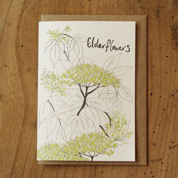 Elderflowers Card