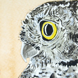 ORIGINAL ACEO No.38 'yellow-eyed owl' Wildlife Watercolor & Charcoal Painting