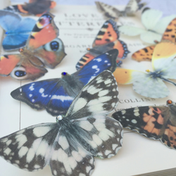 Silk butterfly hair clips.  British Butterfly collection set of 7