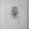 Feather Dry-point Print