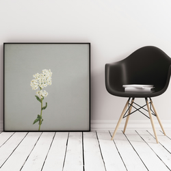 Minimal Floral Photography, Elegant Flower Print  - White Flowers