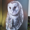 Original barn owl design, quality printed greetings card with envelope. A6.