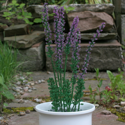Heather pot