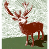 The Stag poster-print