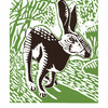The Black Hare poster-print