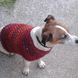 Spirit Dog Jumper