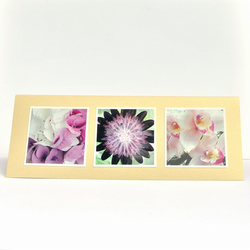 Blank Card with Three Photos of Flowers