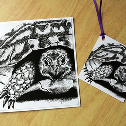 Tortoise greetings card and gift tag set