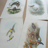 Vintage 1940s Bird Prints Paper Ephemera