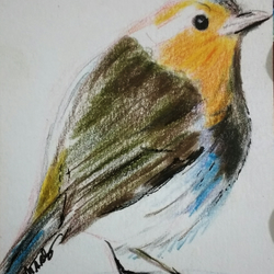 Aceo Animal Robin Wildlife Original Colour Pencil Drawing