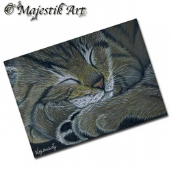 ACEO Print Tabby Cat FORTY WINKS Feline Pet Animal