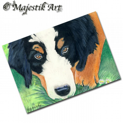 ACEO Print Bernese Mountain Dog Pet Puppy PLAY WITH ME