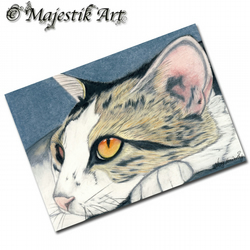 ACEO Print Tabby Cat Feline Pet Animal PLACID