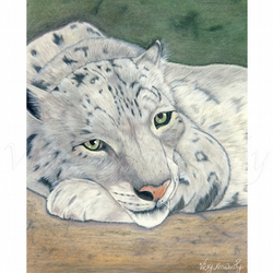 Snow Leopard Fine art Print A3 Archival REFLECTION Wildlife