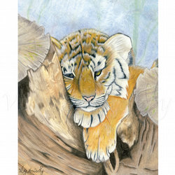 Tiger Cub Fine art Print A4 Archival WEARY Wildlife