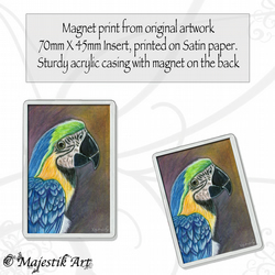 Parrot Magnet PRETTY BOY Bird Pet VK