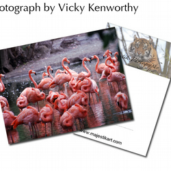 Flamingo ACEO Print Photography by VK
