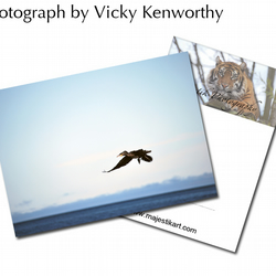 Cormorant ACEO Print Photography by VK