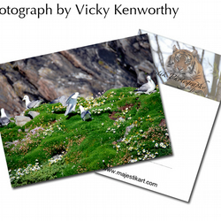Gull ACEO Print Photography by VK