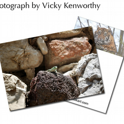 Lizard ACEO Print Photography by VK