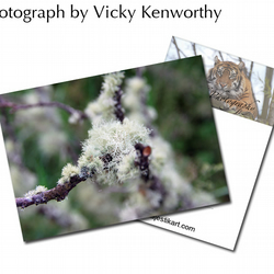 Moss ACEO Print Photography by VK