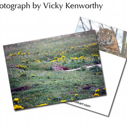 Rabbit ACEO Print Photography by VK