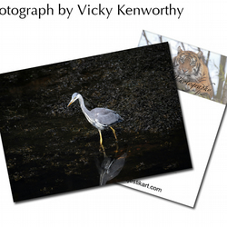 Heron ACEO Print Photography by VK