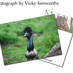 Emu ACEO Print Photography by VK