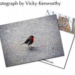 Robin ACEO Print Photography by VK