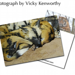 Hunting Dogs ACEO Print Photography by VK