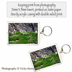 Gull Keyring Photography by VK