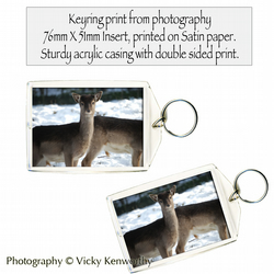 Deer Keyring Photography by VK