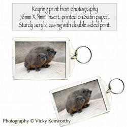 Rock Hyrax Keyring Photography by VK