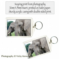 Elephant Keyring Photography by VK
