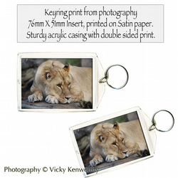 Lioness Keyring Photography by VK