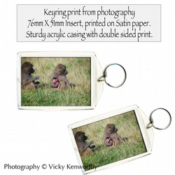 Baboon Keyring Photography by VK