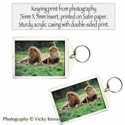 Lion Keyring Photography by VK