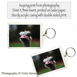 Ostrich Keyring Photography by VK