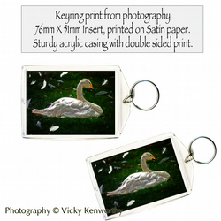 Swan Keyring Photography by VK