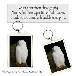 Owl Keyring Photography by VK